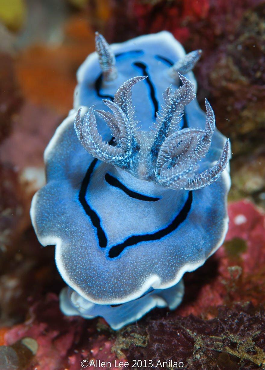 Морское существо картинки