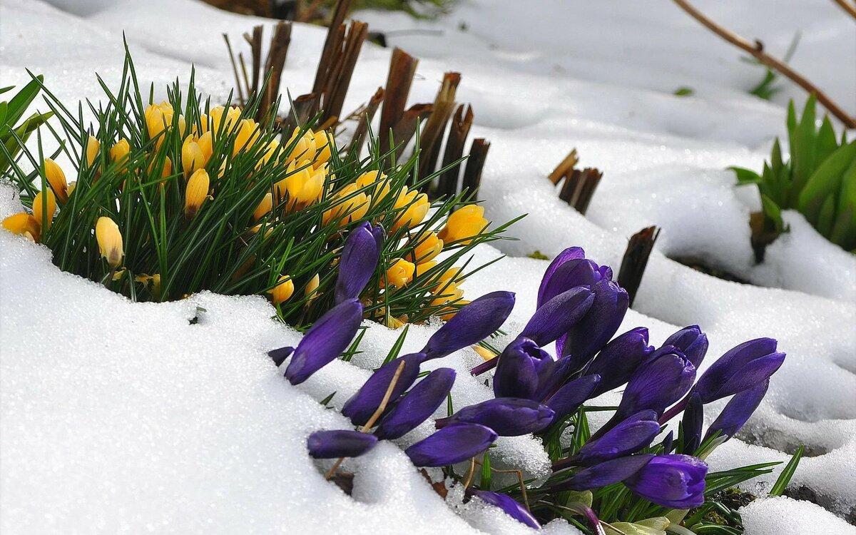 западные блогеры фоновые картинки ранняя весна домашних условиях
