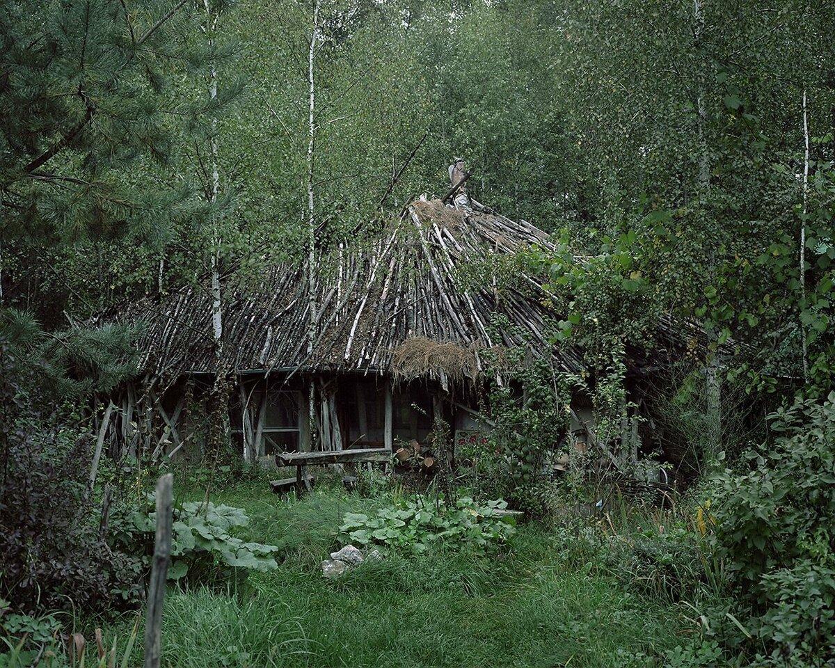 Лесной отшельник картинки