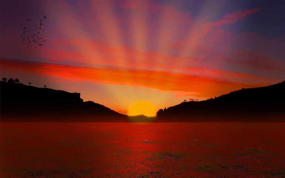 Красивое фото рябина зимой