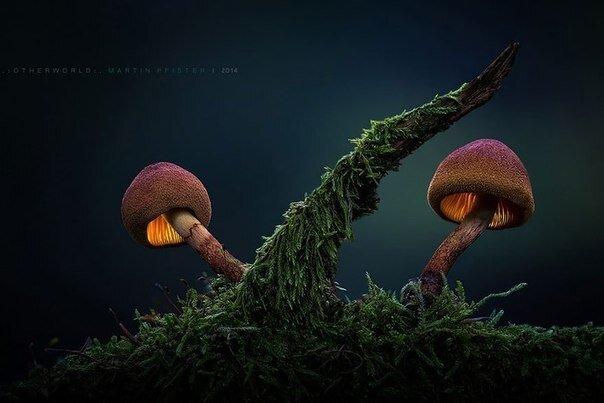 Сказка про грибы фото