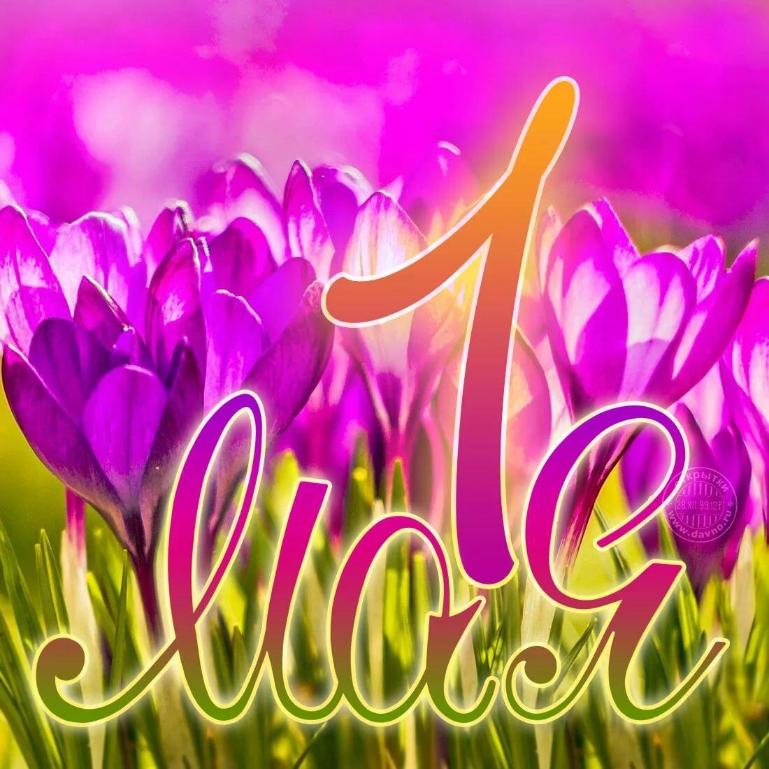 нарезаем поздравить с 1 мая открытка прикольные меланхоликам солнечные оттенки