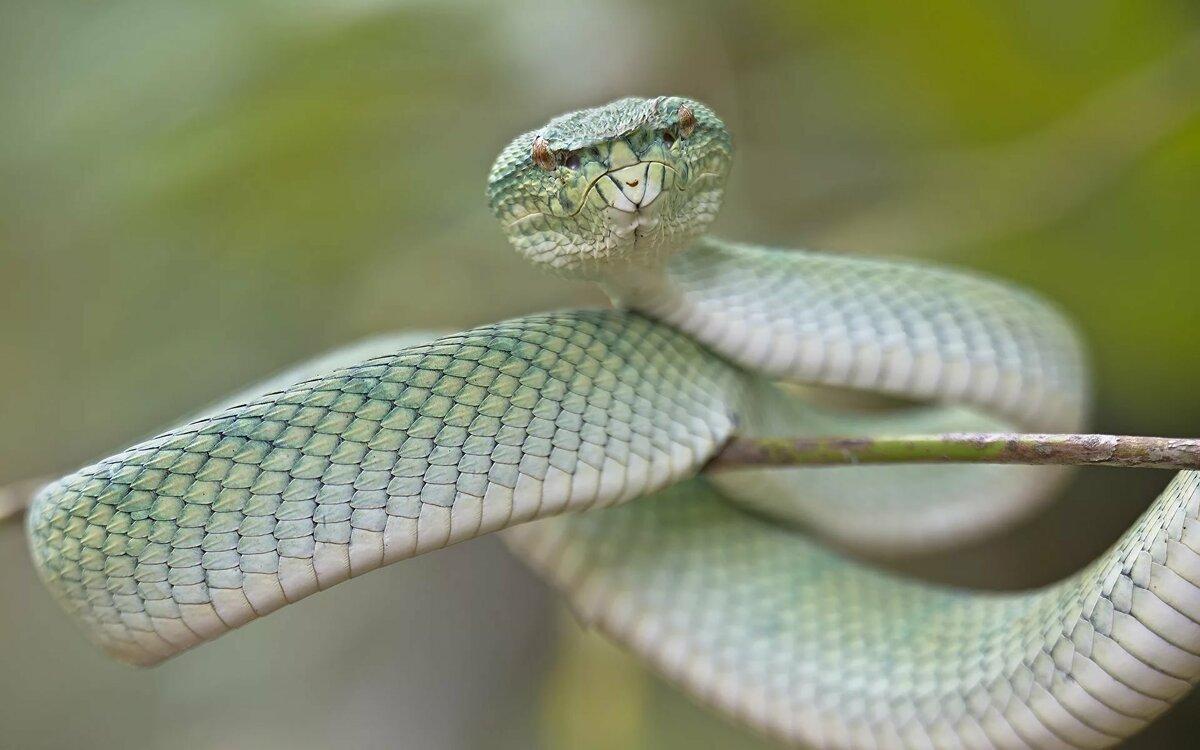 Картинки настоящих змей