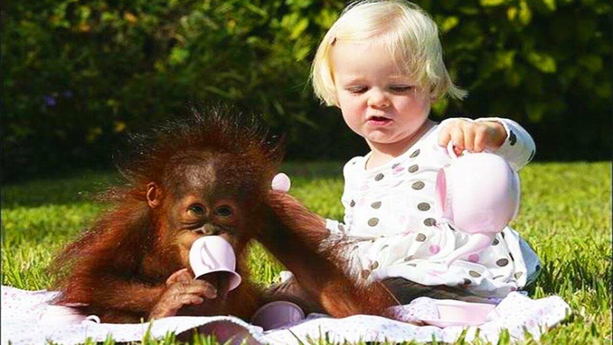 Картинки девочка и обезьяна