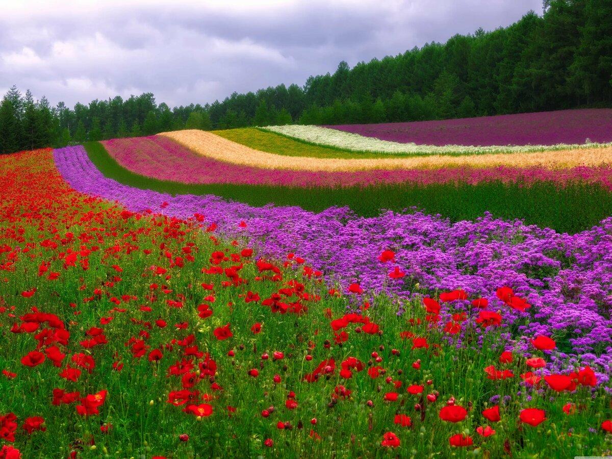 Краски лета фото и картинки
