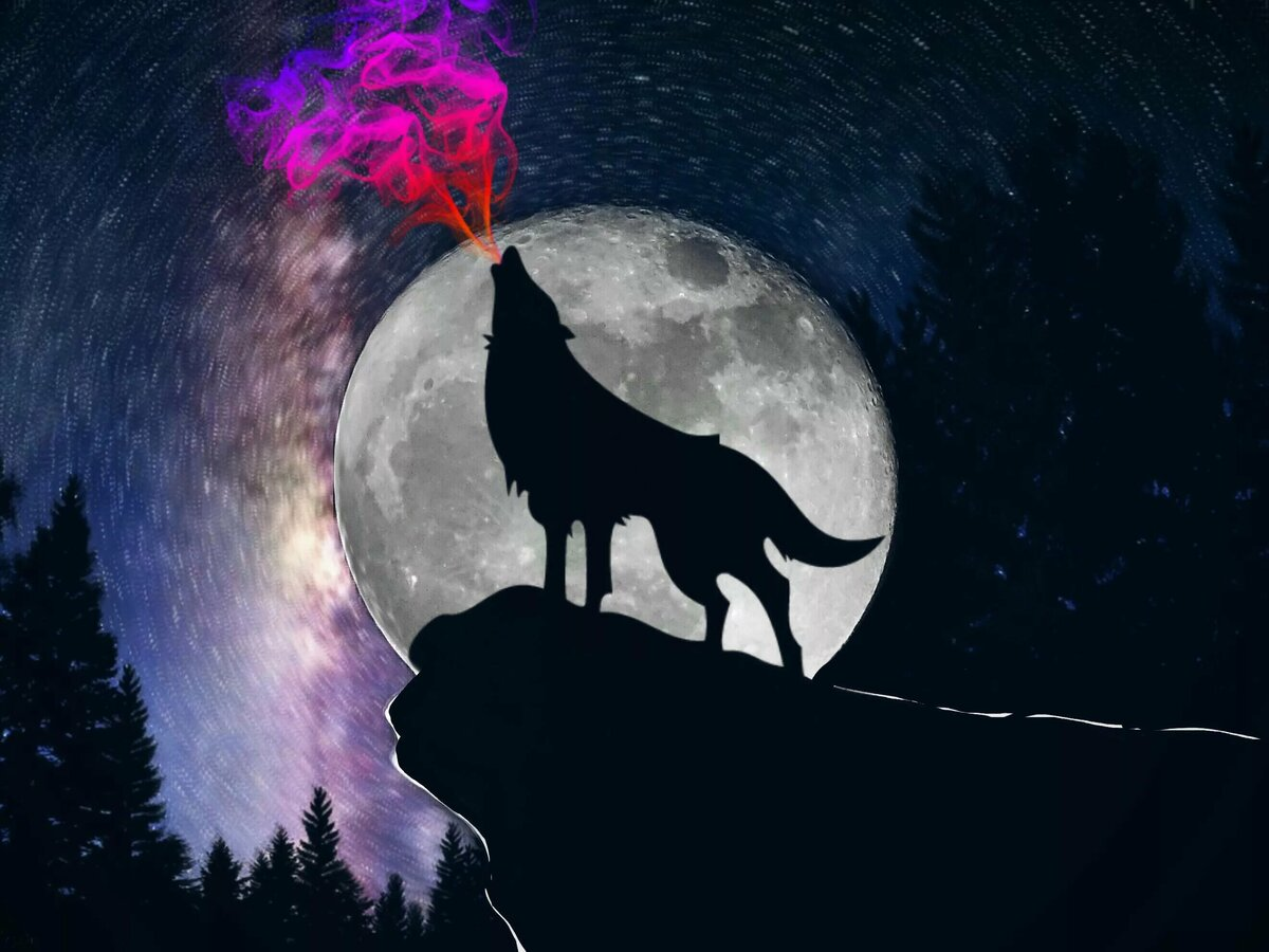 Картинка на рабочий стол волк воет на луну