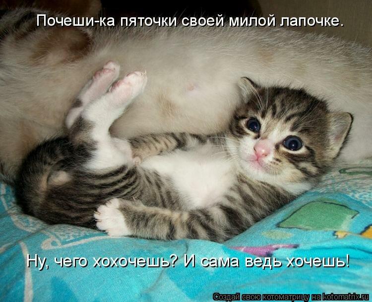 Смотреть картинки смешных котят с надписями