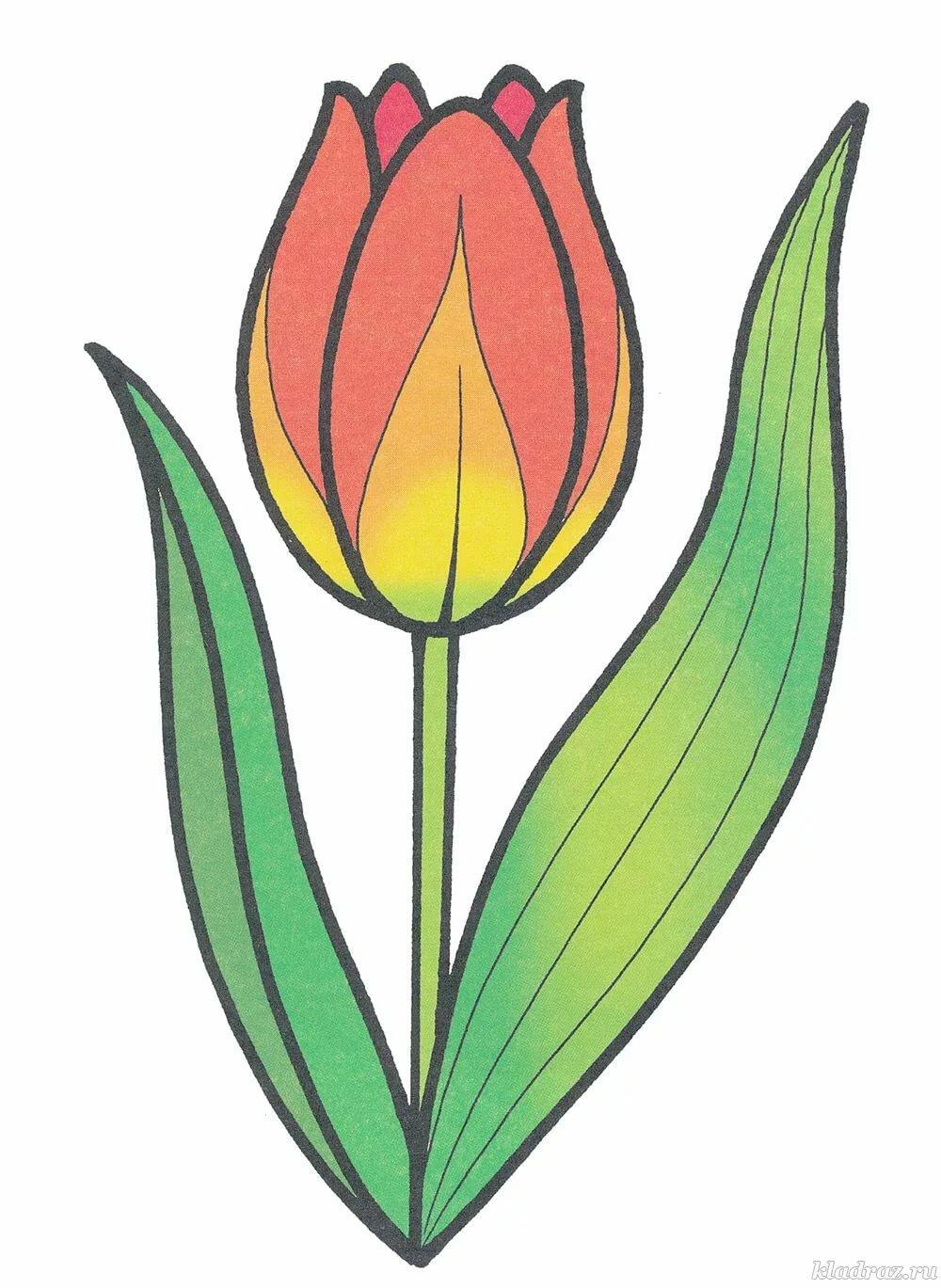 Тюльпан картинка для детей нарисованные