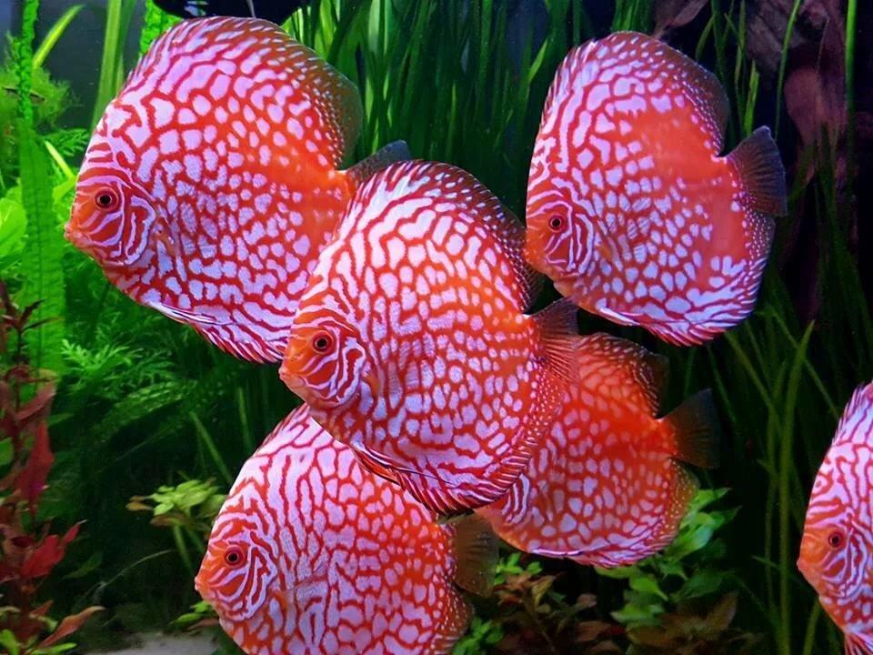 Картинки виды аквариумных рыб