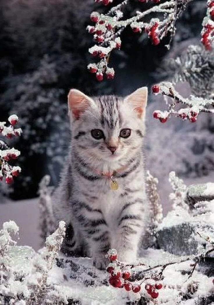картинки зимние котята