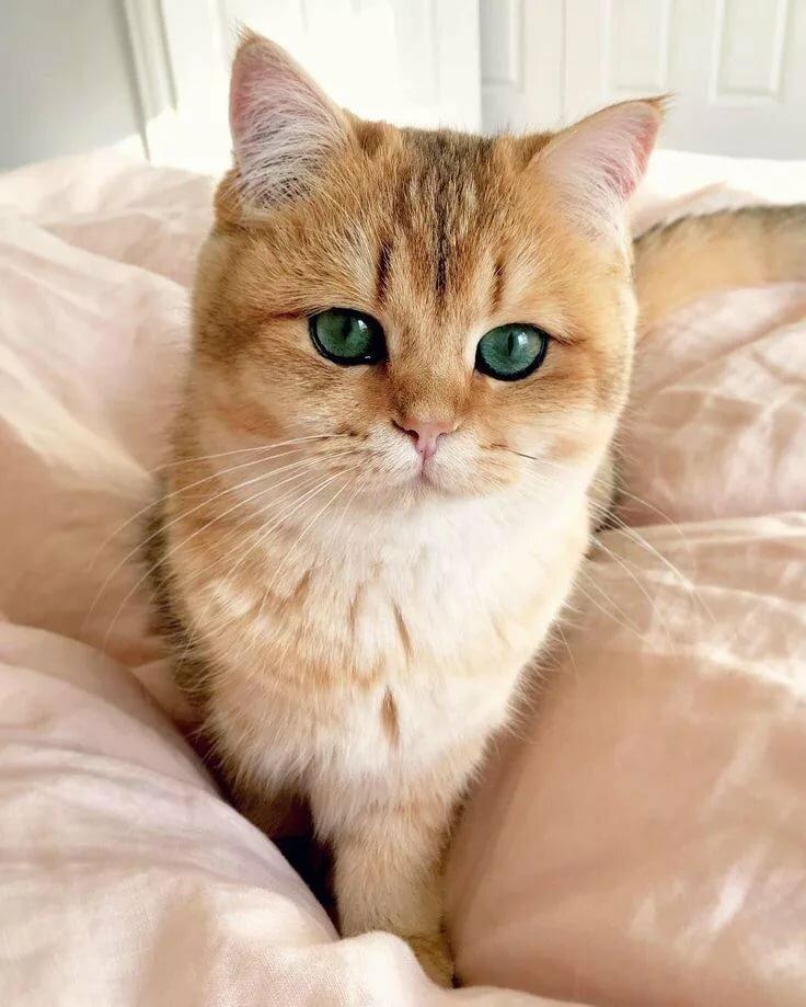 картинки котов самые красивые несколькими русскими