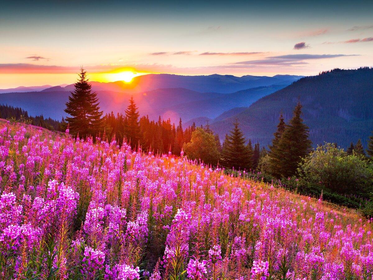 Картинки природы цветов
