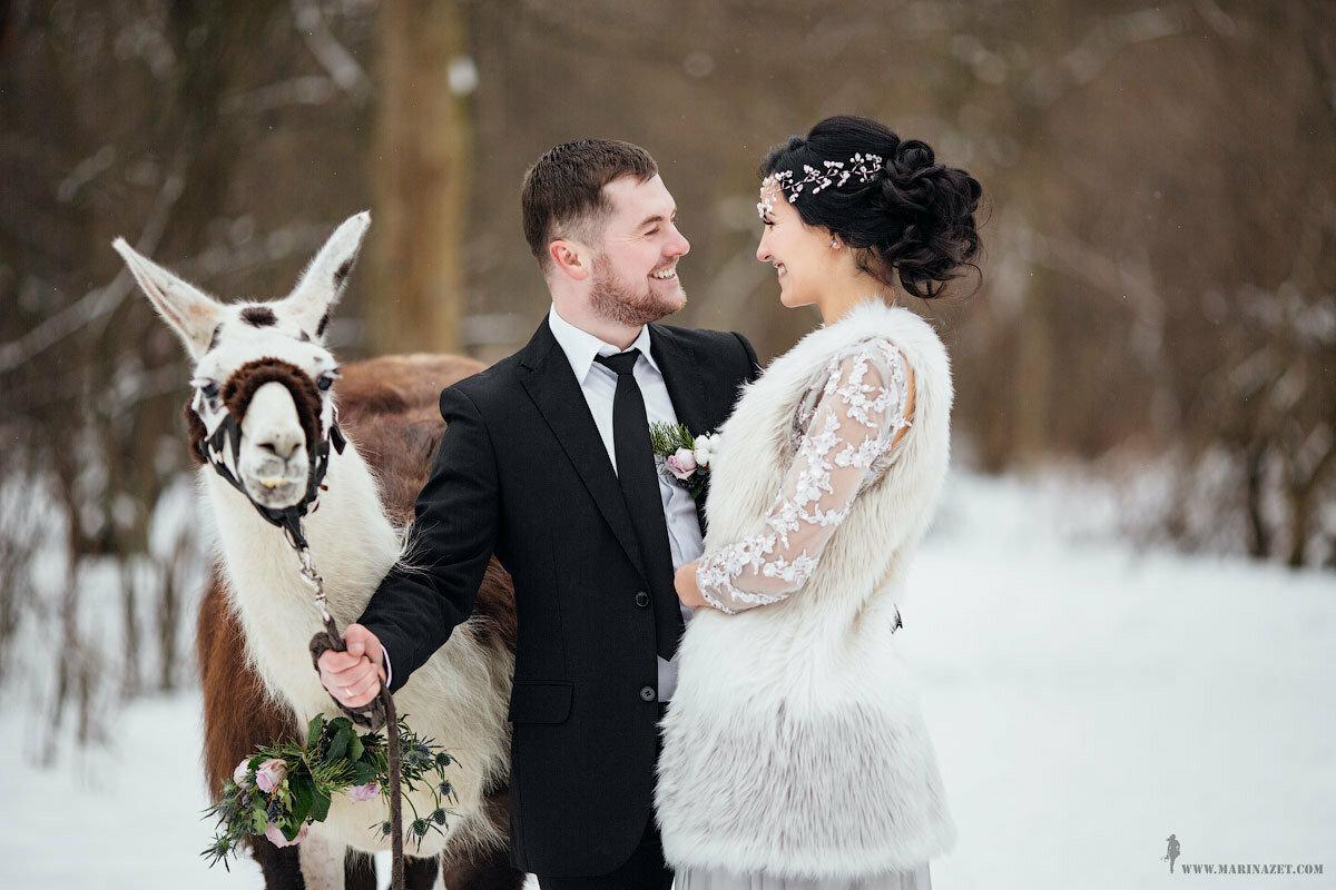 Свадьба зимой где фотографироваться в спб собаки