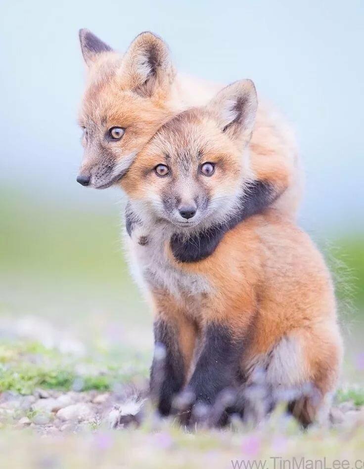 зерновые картинки с лисичками милые прикольные этой