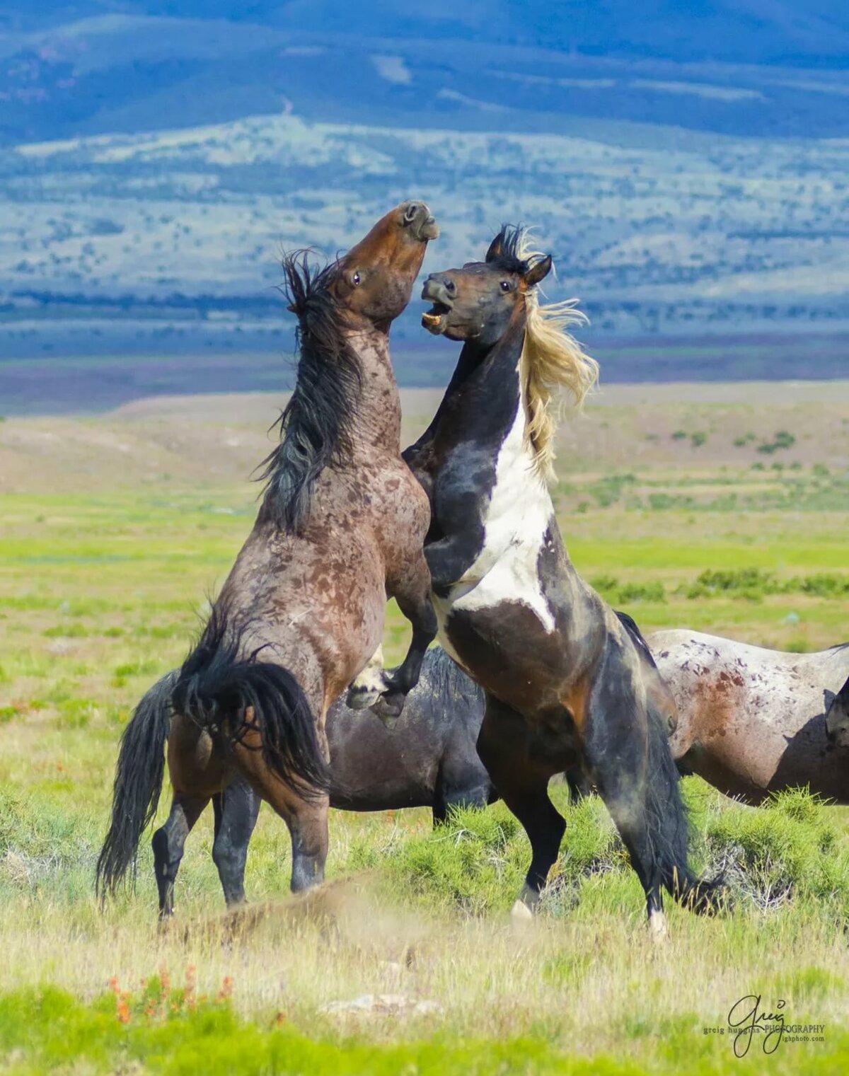 наряды, дикая лошадь картинка образом