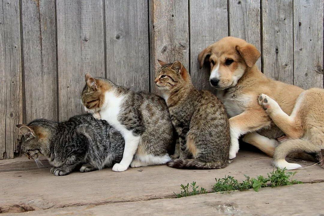 Собачья семья в картинках