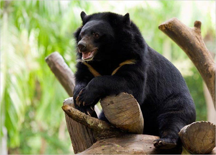 Картинка виды медведей