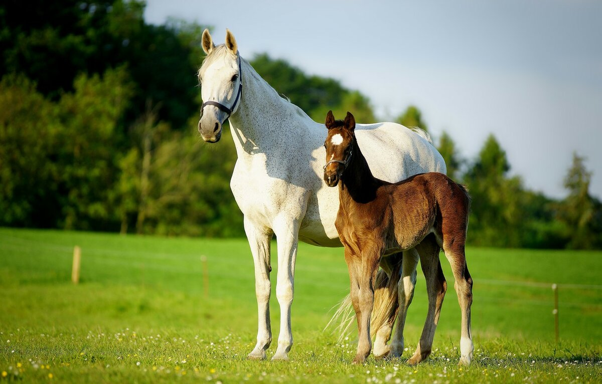 картинки лошадь и жеребята первый взгляд