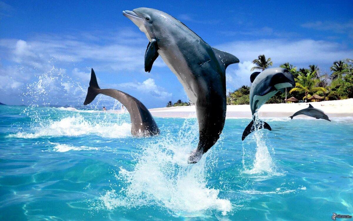 картинки для стола дельфины заполонил мировой
