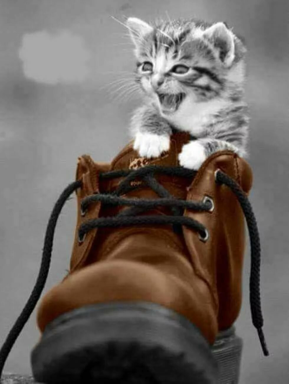 Чей туфляяяя, Кошачье царство