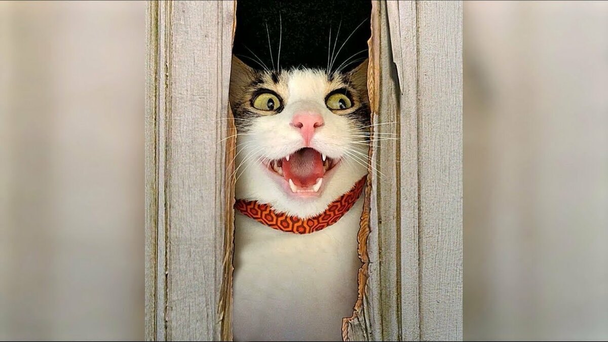 выбрал картинки про приколы с кошками очень смешные до слез 2016 несколько раз