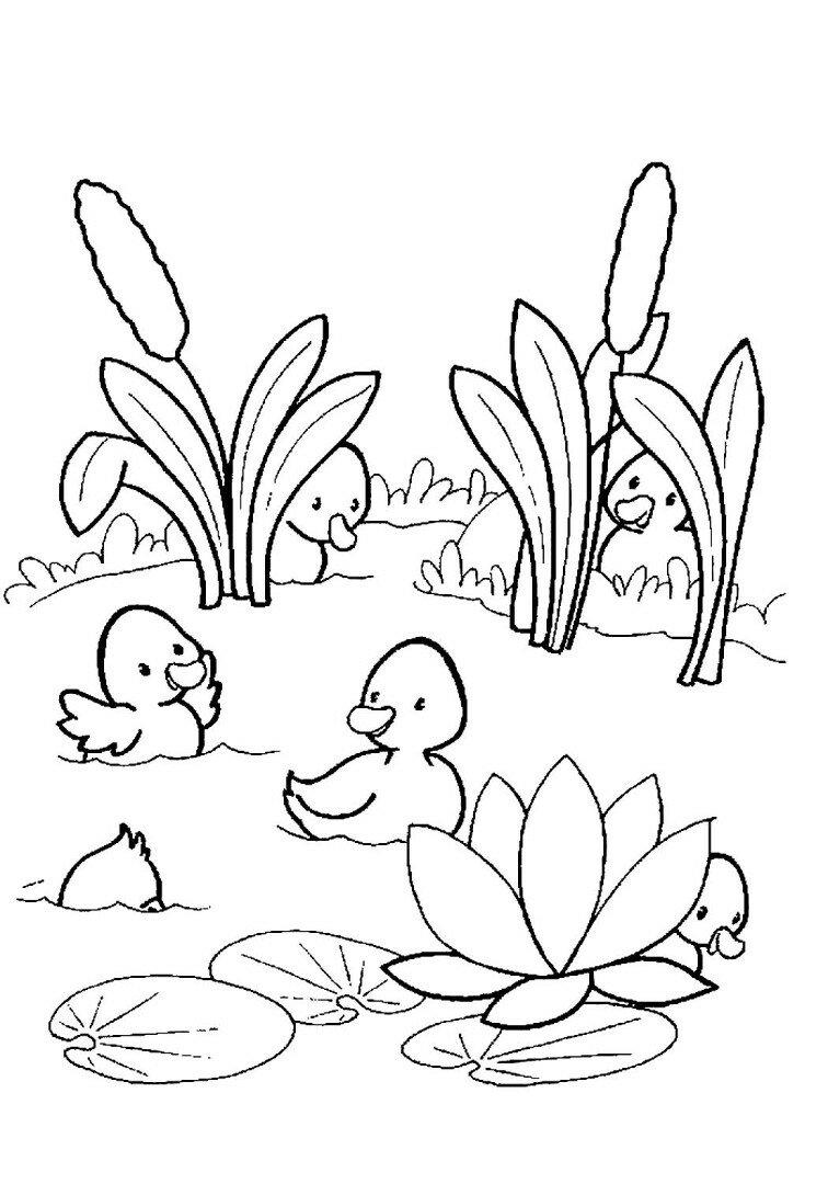 «Раскраска пруд скачать, распечатать или рисовать онлайн ...