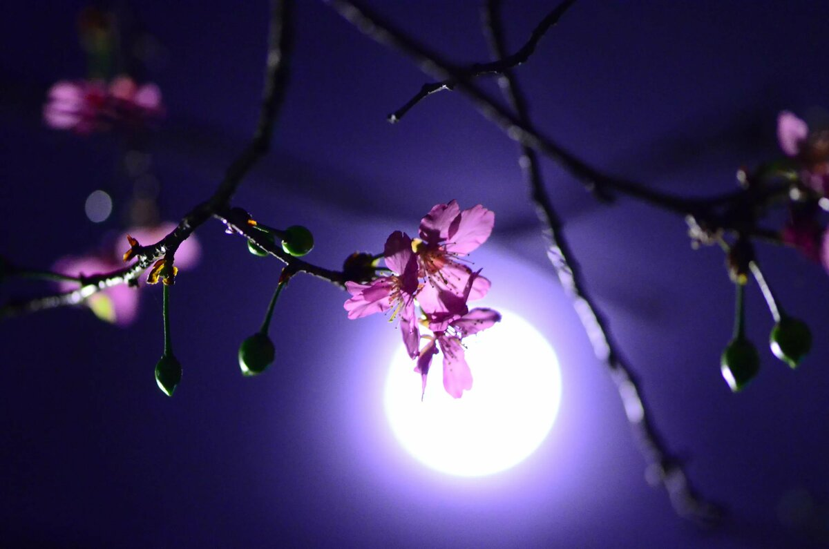 фото весны луна бультерьера