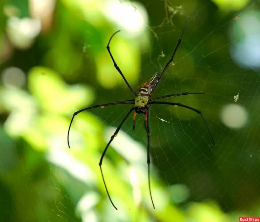 фото паука в зауралье секс