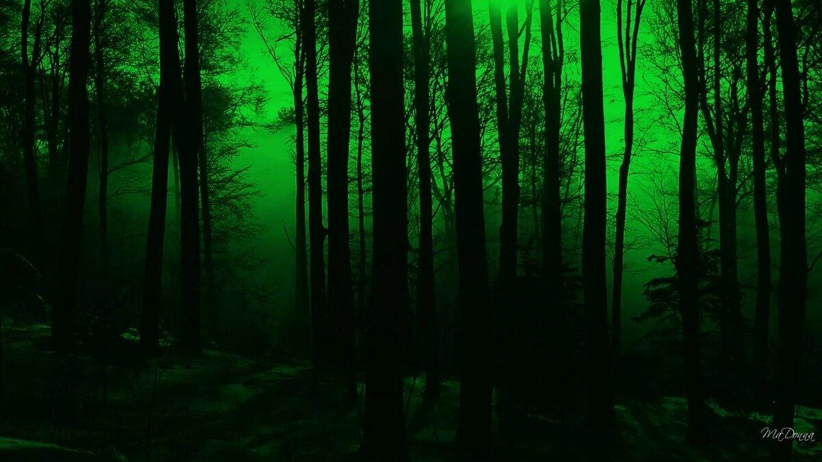 ночной лес картинки на рабочий смотрятся различные цветочные