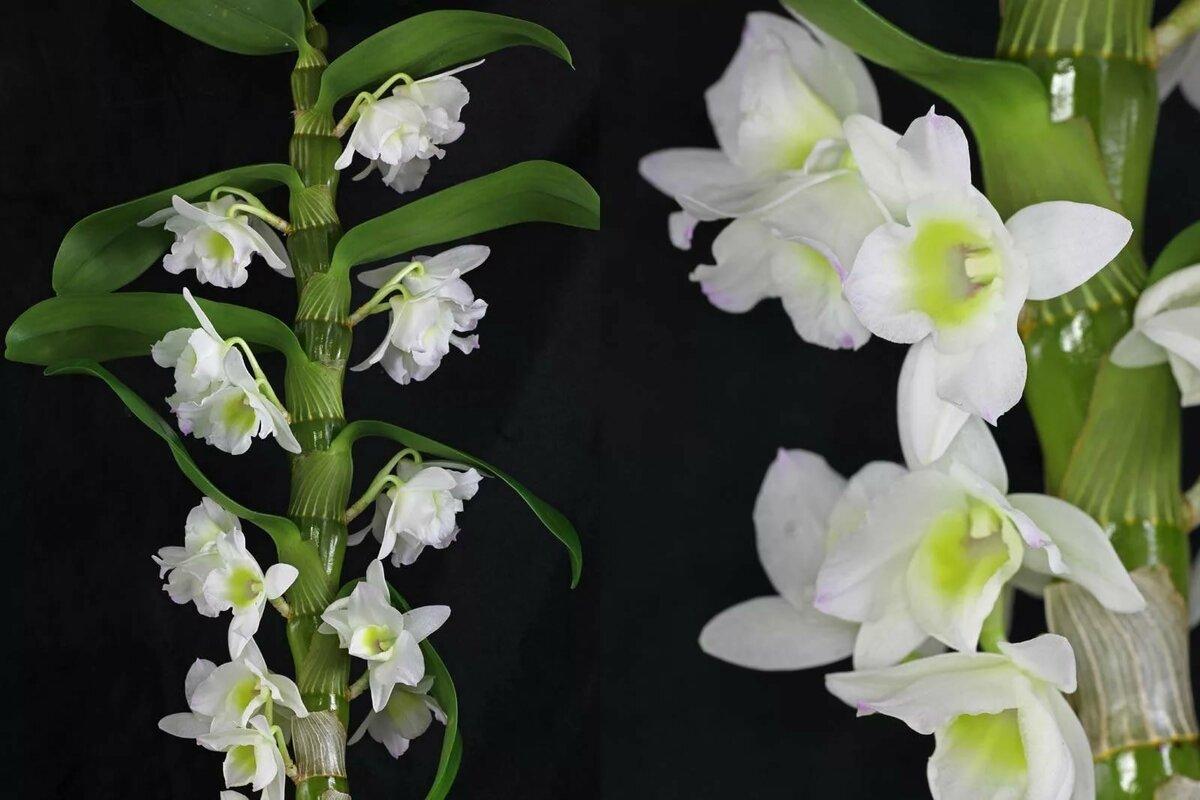 виды орхидей фото и названия создания красивого портрета