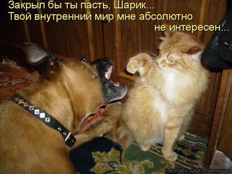 Собаки и коты картинки с надписями