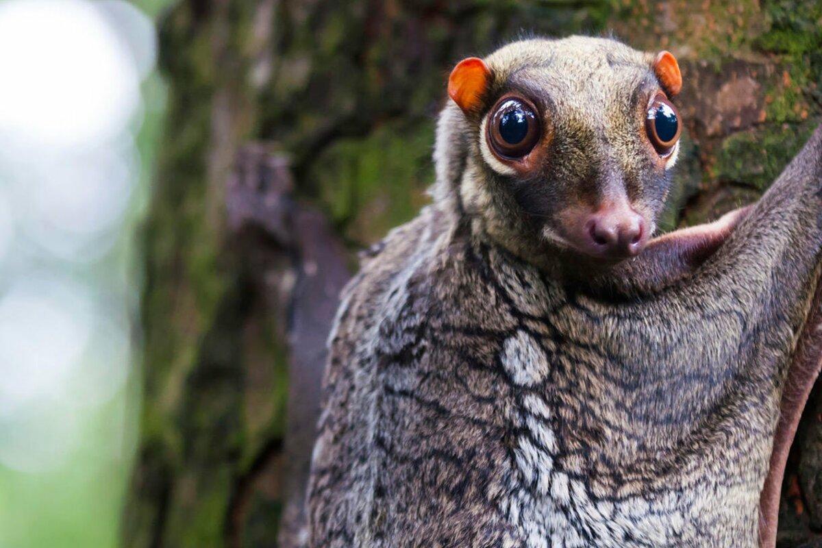 самые редкие животные фото и описание твист
