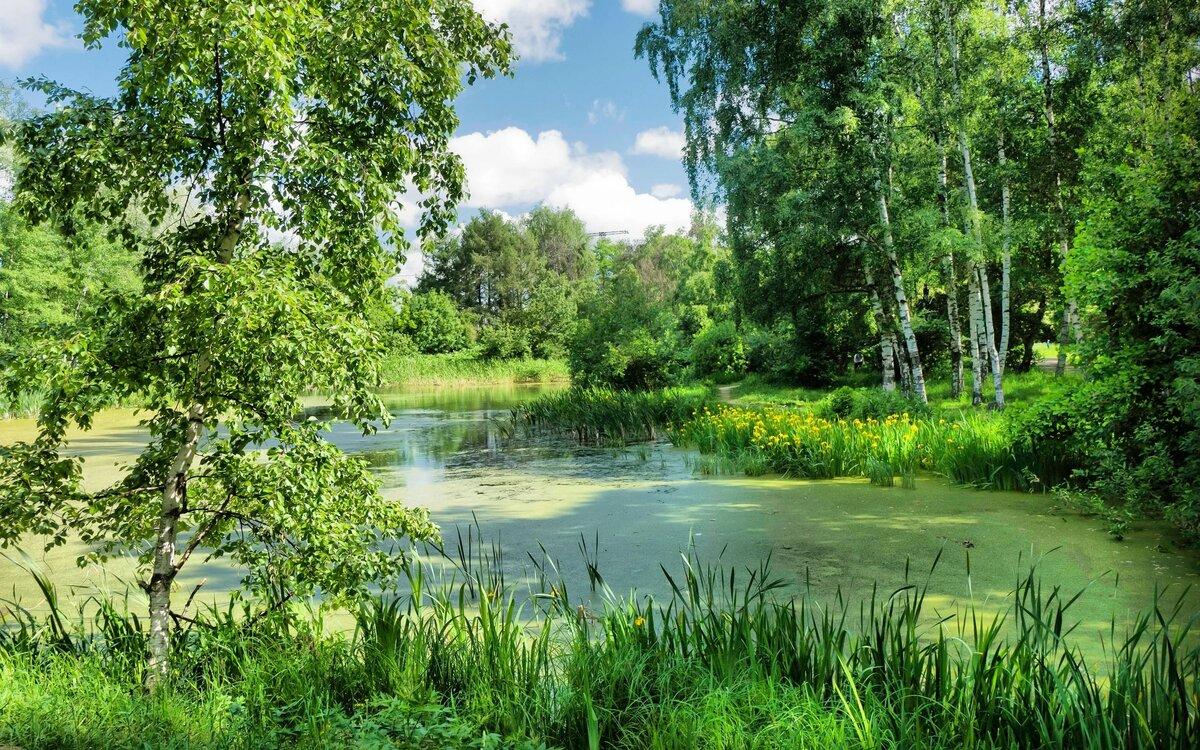 учтём картинки речка лес лето поменять датчик