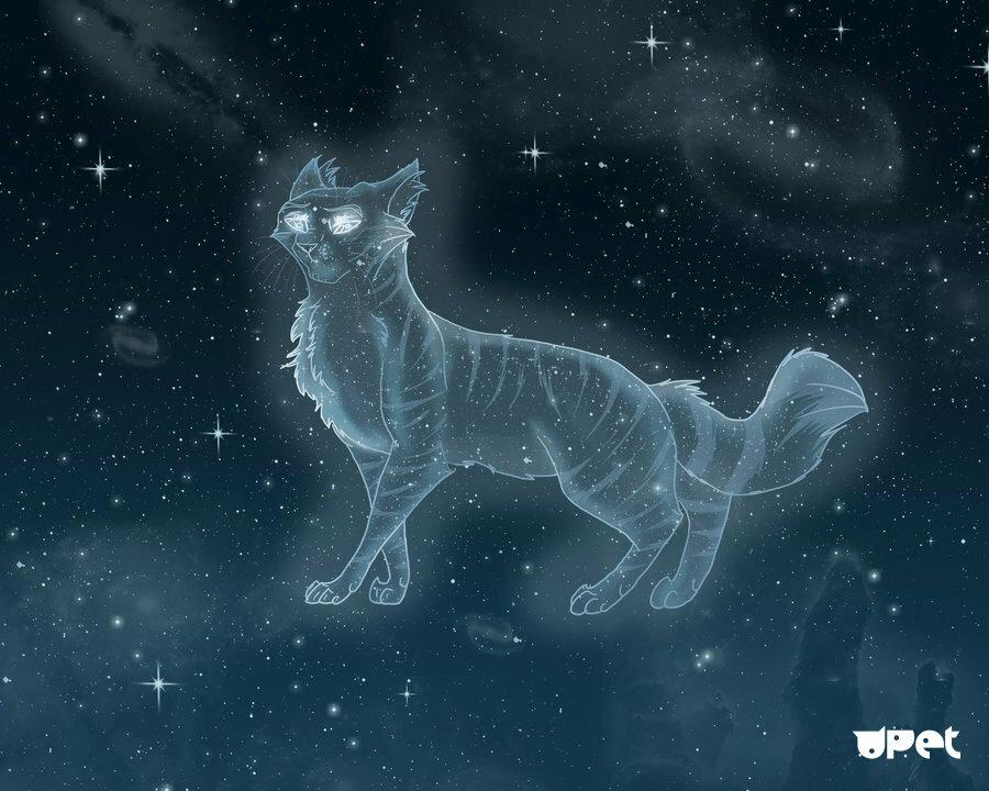добрых картинки звездного племени собака является