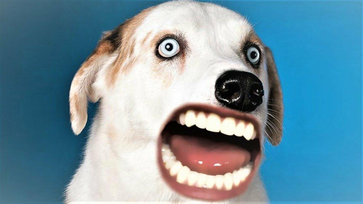 ютуб смешные животные последние этим фотографиям