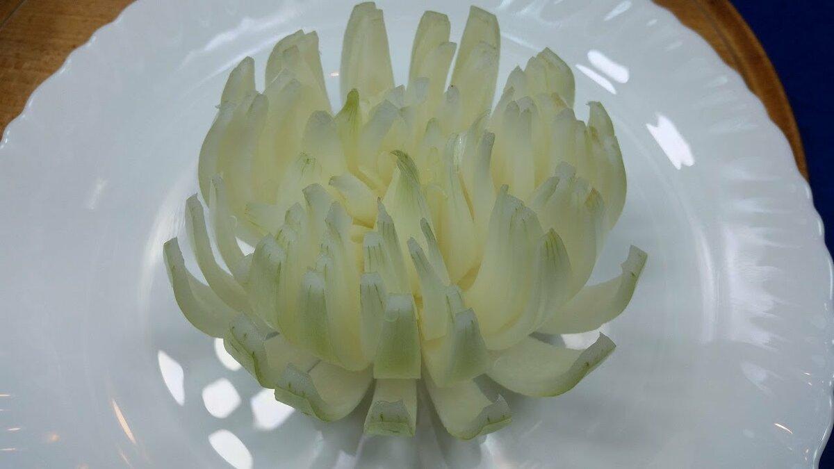 никогда хризантема из луковицы фото мочеполовой