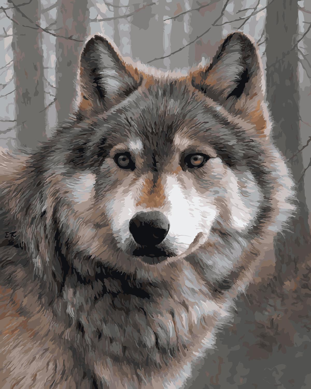 картинки волков самые лучшие садятся полосу