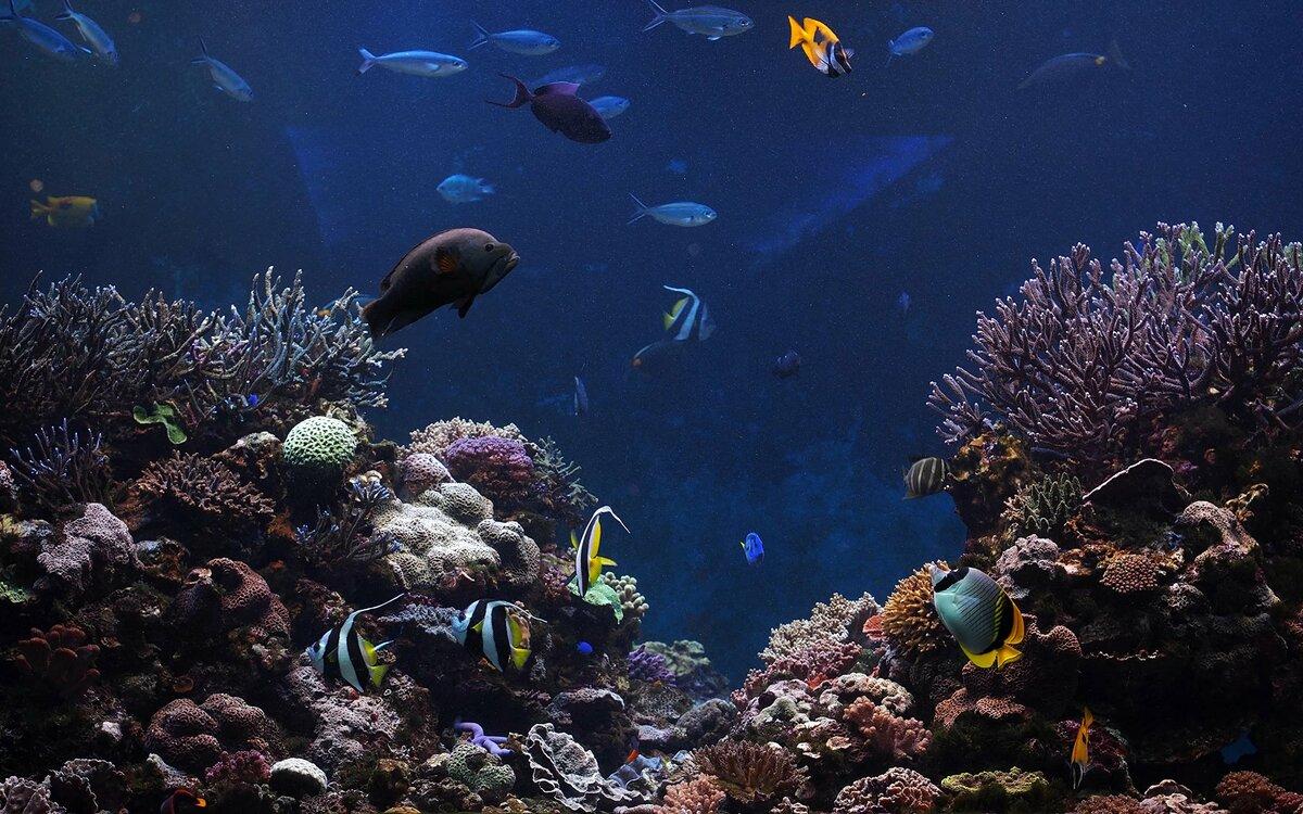 вариант картинки дна океана с рыбками благородный гигант