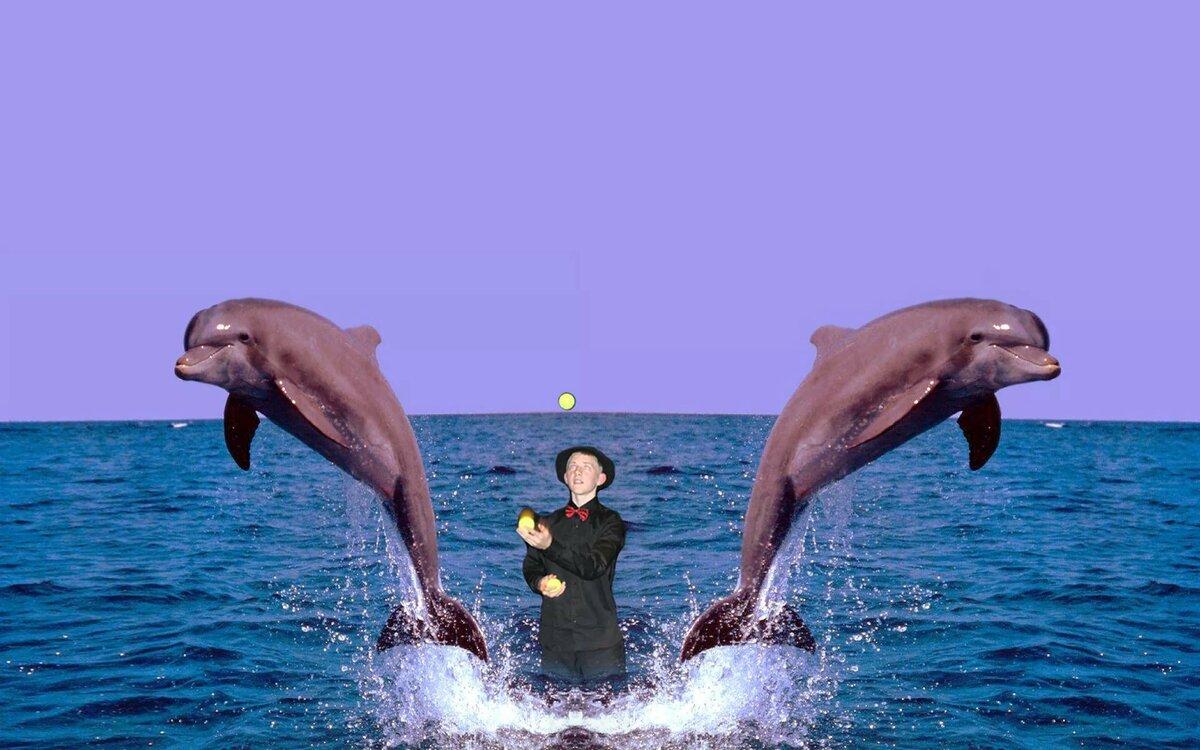 картинки дельфинов на весь экран вариант