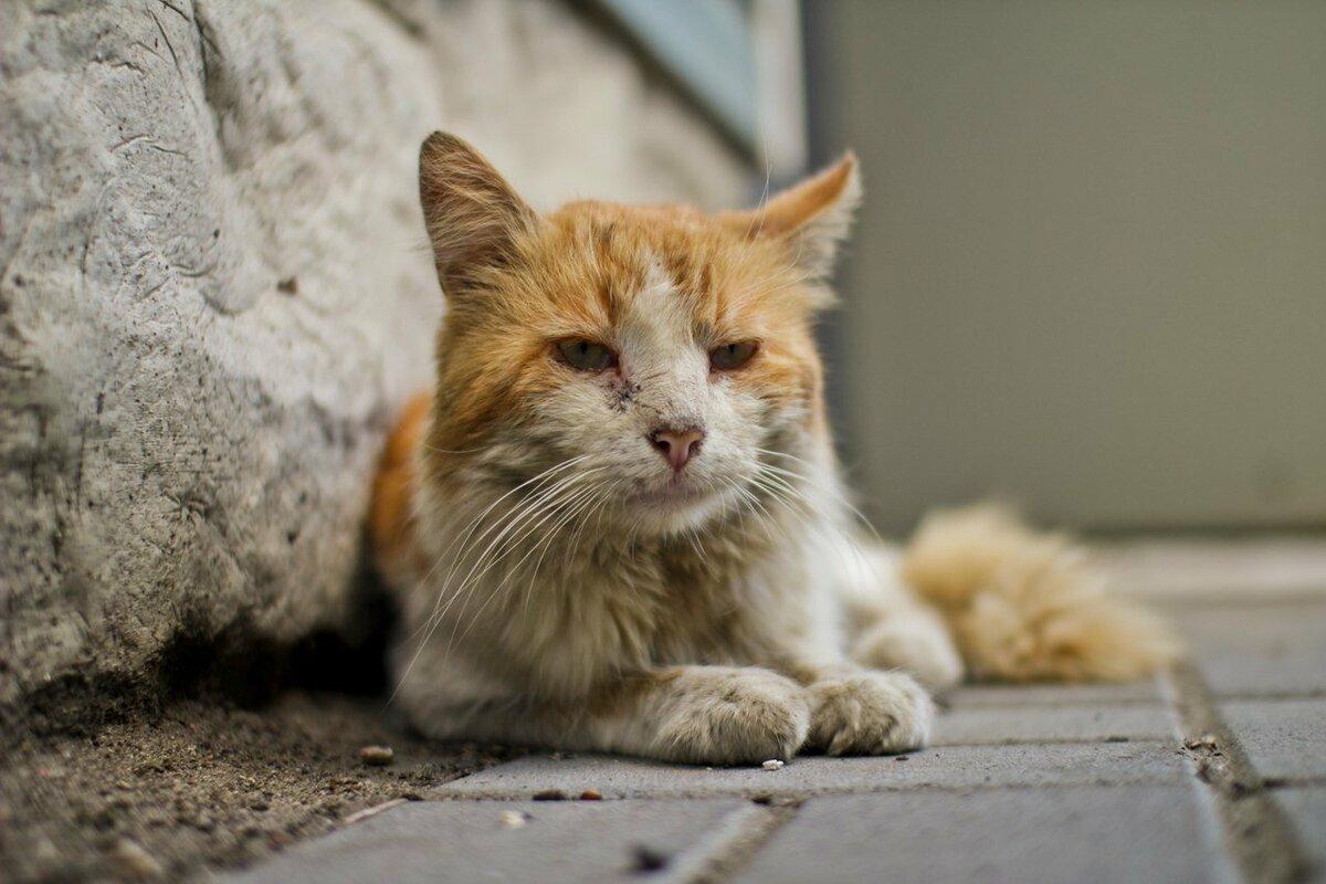имеет фото с бездомными кошками разъем гнездо смартфона