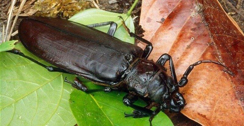 самые большие жуки мира картинки после