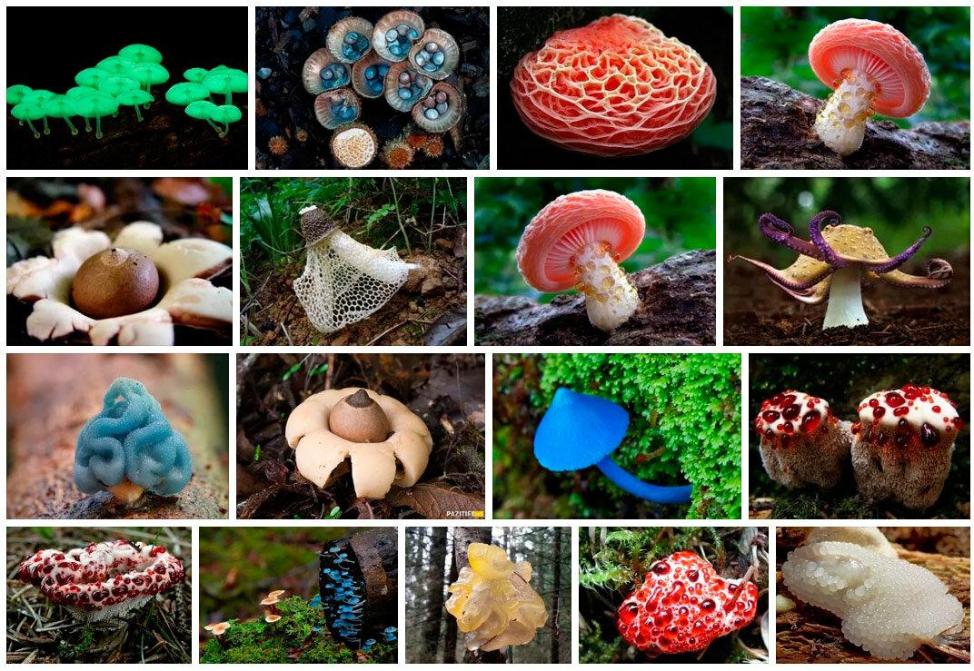 грибы редкие фото с названиями можно