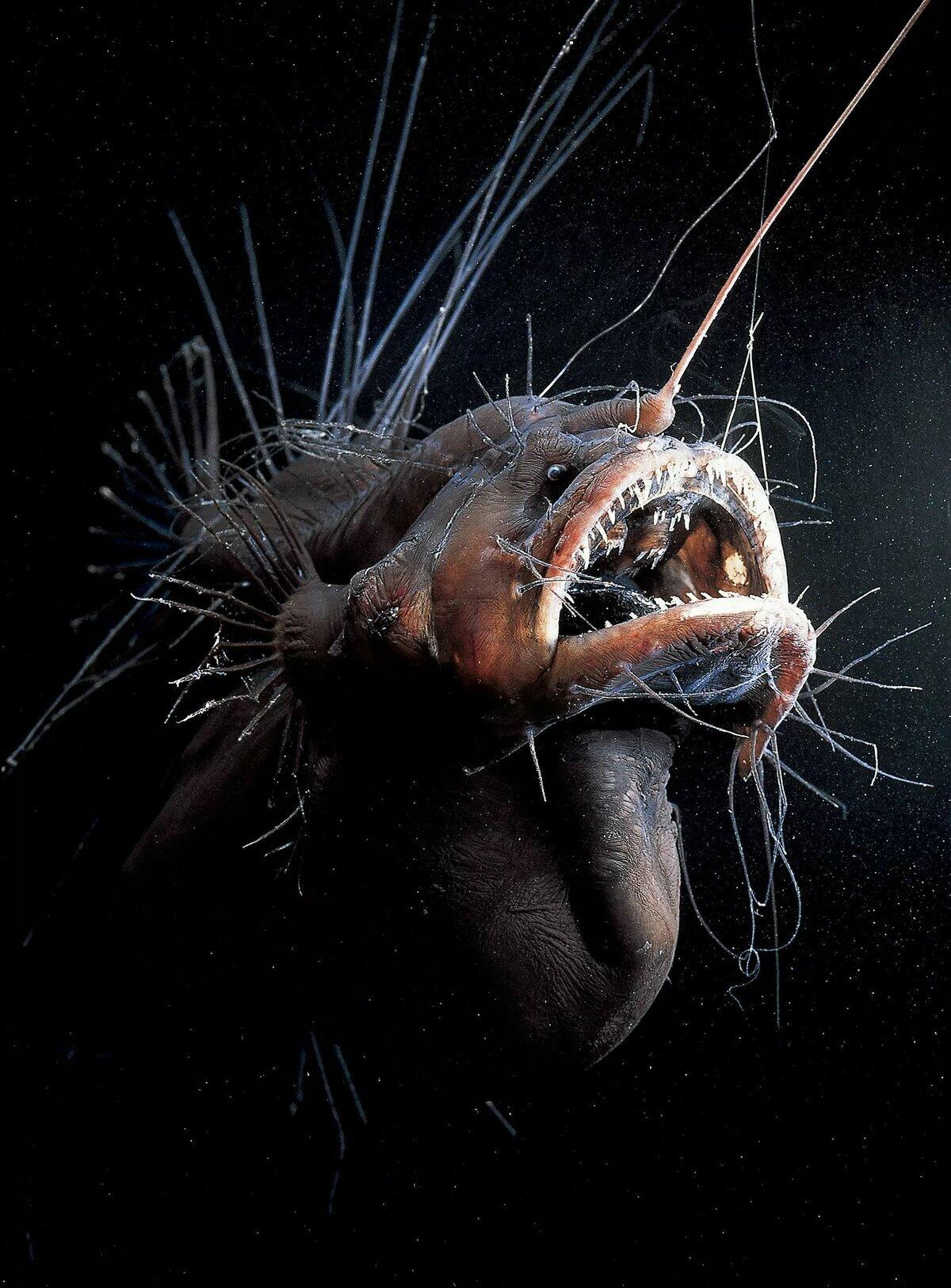 что обитатели глубин океана фото гонщик провел