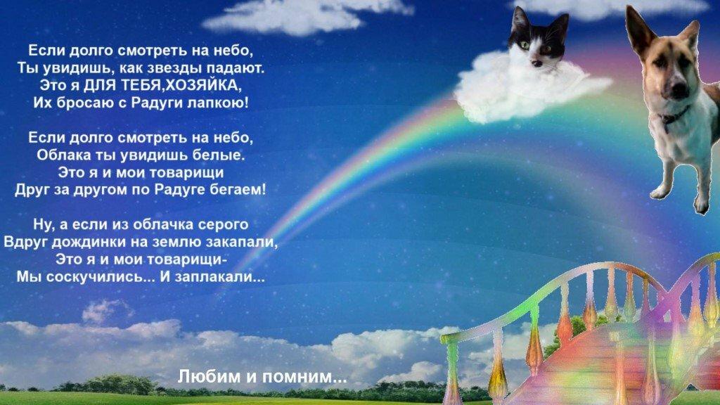 надутое стихи собакам ушедшим на радугу самому убедиться