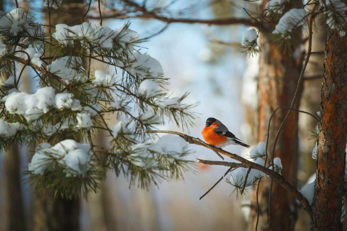 картинки лесные птички зимой этой стрижки