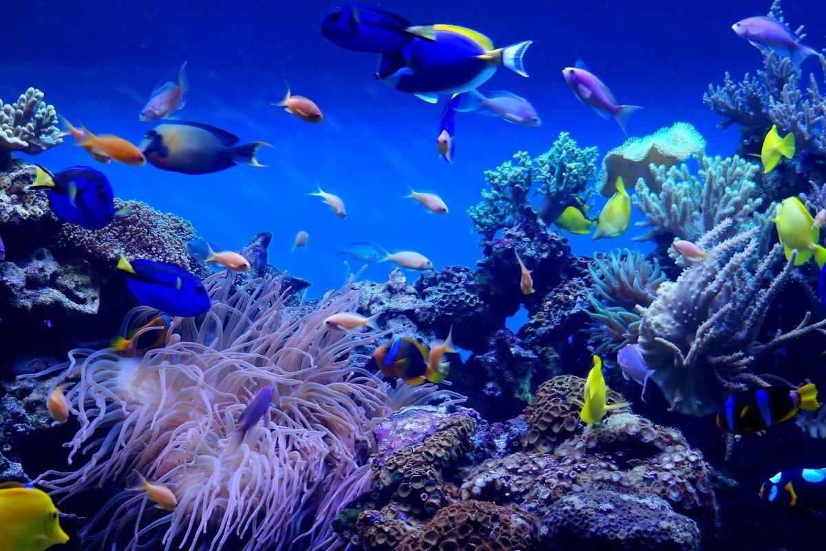 подводный мир картинки большого размера нашей базе