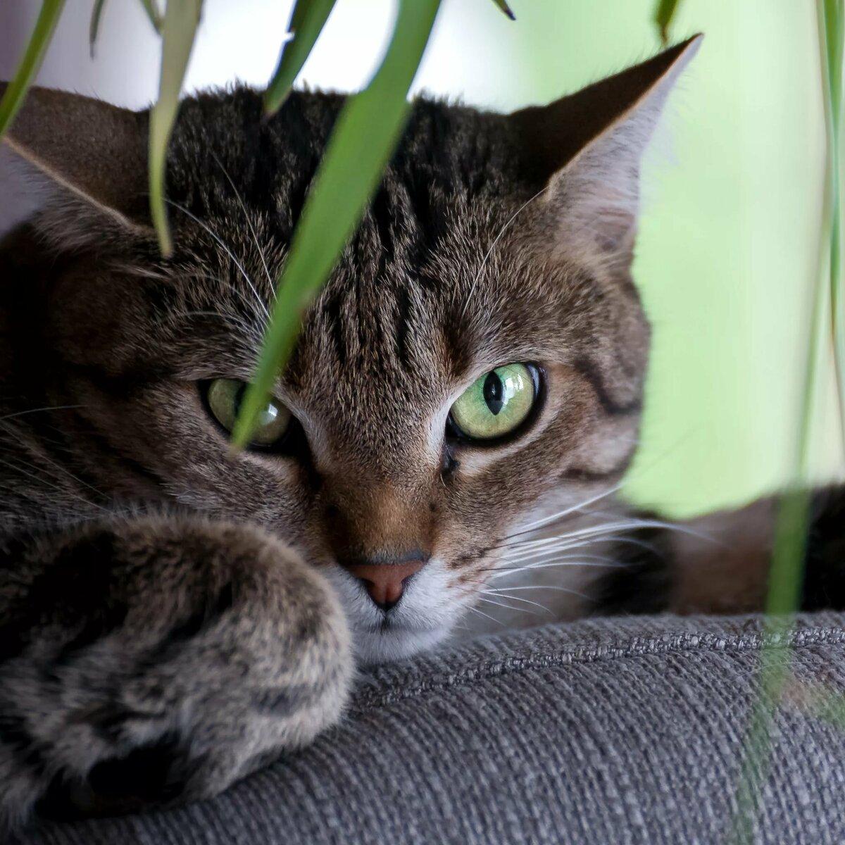 кошки с зелеными глазами фото два