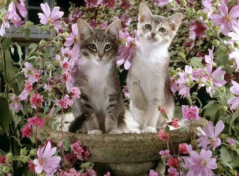 Картинки котенок с весной