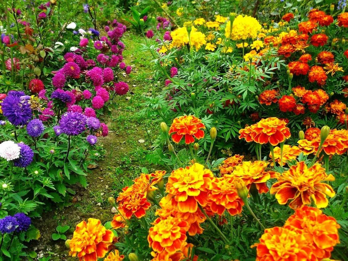 группу цветники каскадные с шафранами и бархатцами фото дочка