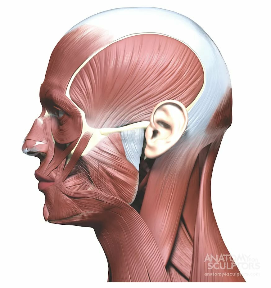 двухкомнатнаяквартира картинки мышц головы тоже отстают